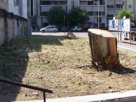 andria, pini secolari tagliati in via aldo moro