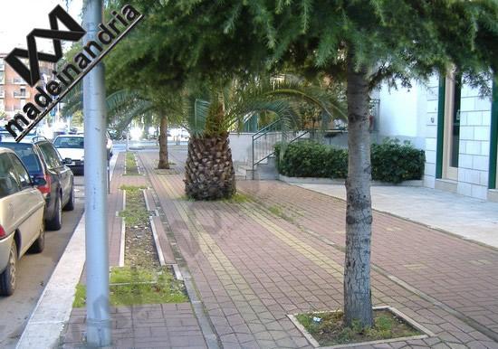 sulla pista ciclabile...gli alberi