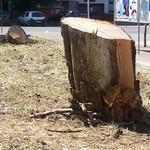 Villa Comunale, alberi tagliati per dare spazio alle bancarelle